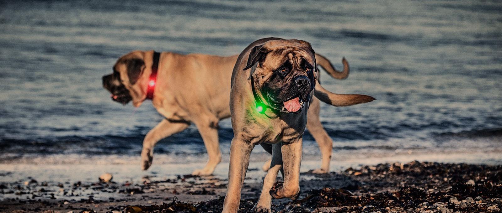 orbiloc_slider_forside_dog_100kg